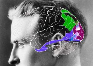 В темном подвале нашего мозга, который называют бессознательным, хранится все, что мы когда-либо видели, слышали, нюхали