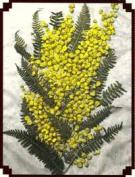 Аппликация из природных материалов:  «Мимоза»