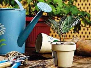 Уход за комнатными цветами и растениями зимой: полив, подкормка, пересадка и температура