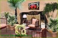 Комнатные растения в интерьере вашего дома