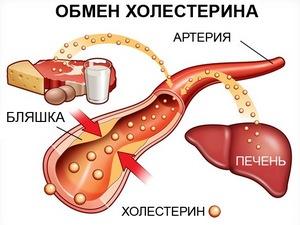 Продукты разжижающие холестерин