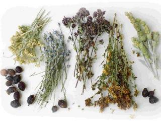 Сборы лекарственных трав для избавления от лишнего веса
