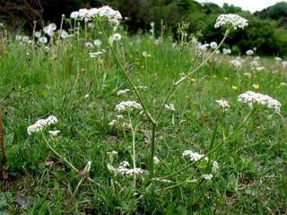Съедобные дикорастущие растения: рецепты приготовления