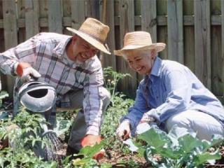 Как работать в саду, чтобы хватило времени и сил