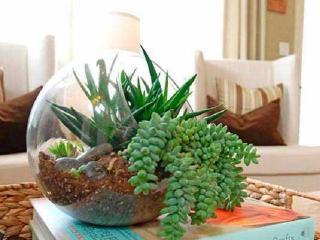Как при помощи комнатных растений недорого изменить интерьер квартиры