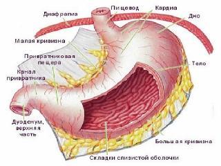 Заболевания желудочно-кишечного  тракта: симптомы, лечение и питание при болезнях ЖКТ