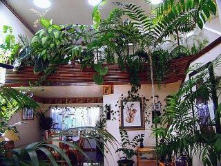 Домашние растения в уютном доме