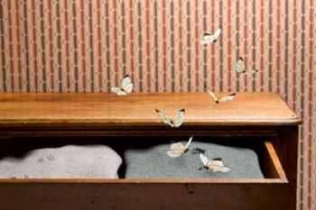 Средства от моли в доме