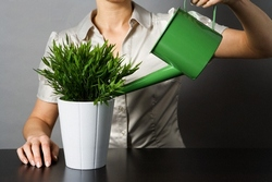 Правильный уход за комнатными растениями в холодное время года