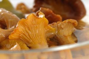 Домашние заготовки: рецепты маринования грибов