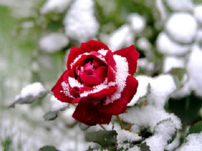 Укрытие для роз 1 м garden dreams 4620769393081