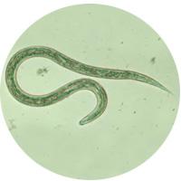 Представляем список опасных инфекционных и паразитарных заболеваний, географию их распространения, а также меры профилактики и защиты от них.
