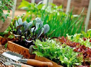 Смешанные посадки работы на садовом участке огородные культуры
