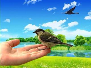 Синица в руках или журавль в небе?