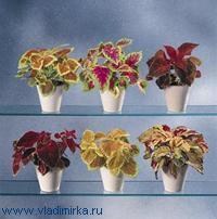 Живительный душ для домашних цветов