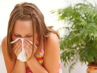 Обострение астмы: лекарственные травы при обострении астмы