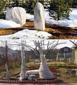 Как уберечь сад от промерзания