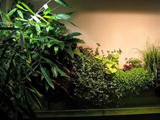 Растущие в тени комнатные растения