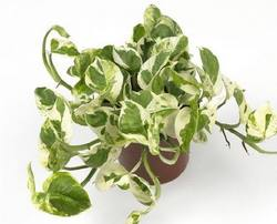 Комнатные растения для вашего дома