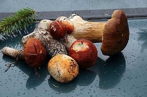 Обычно первые признаки отравления грибами можно наблюдать через несколько часов после того, как человек наелся грибов